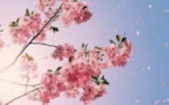 Springtime tunes
